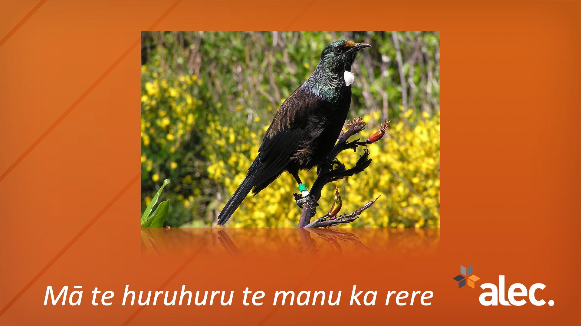 Here s the first one it s a m ori proverb or whakatauki one of